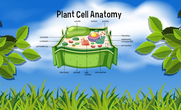 Anatomia delle cellule vegetali in natura Vettore Premium