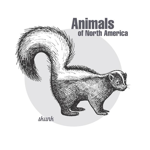 Animale del nord america skunk. Vettore Premium
