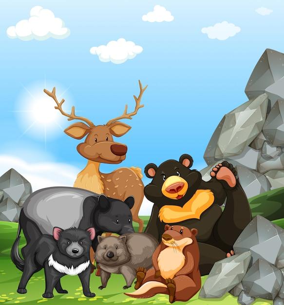 Animali selvaggi nel parco Vettore gratuito