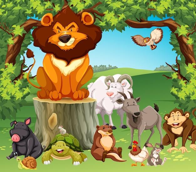 Animali selvaggi nella foresta Vettore gratuito