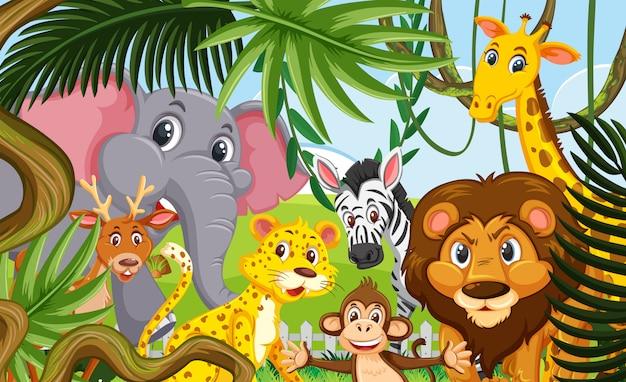 Animali selvaggi nella foresta Vettore Premium