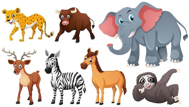 Animali selvatici su sfondo bianco Vettore gratuito
