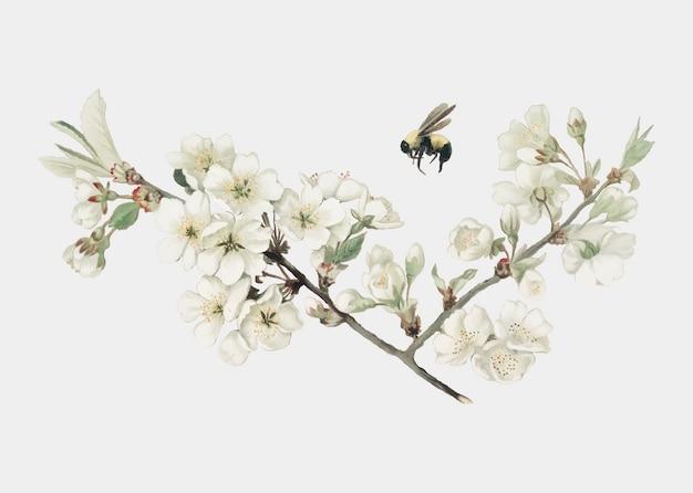 Apple blossom illustrazione su una carta di natale Vettore gratuito