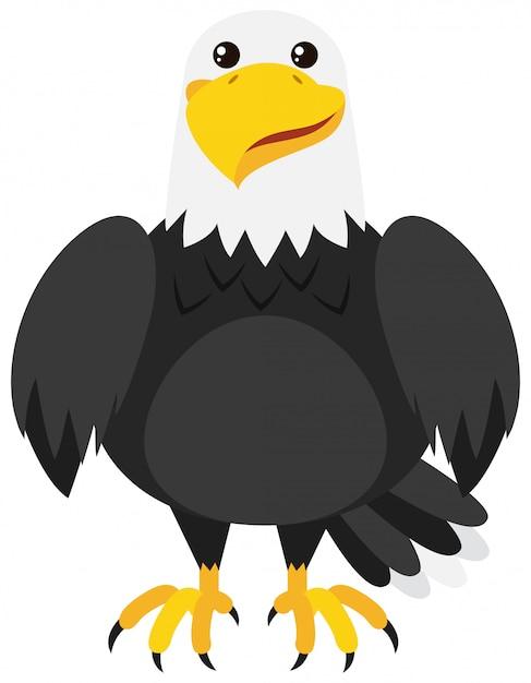 Aquila con faccia felice Vettore gratuito