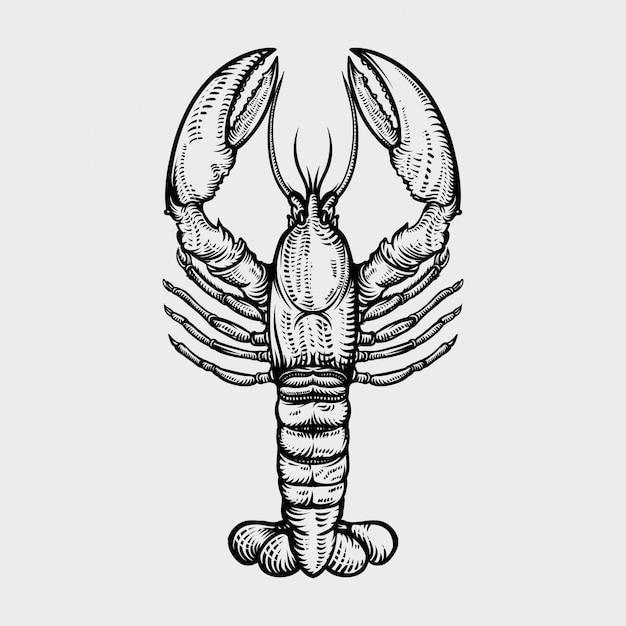 Aragosta illustrazioni disegnate a mano in stile incisione Vettore Premium