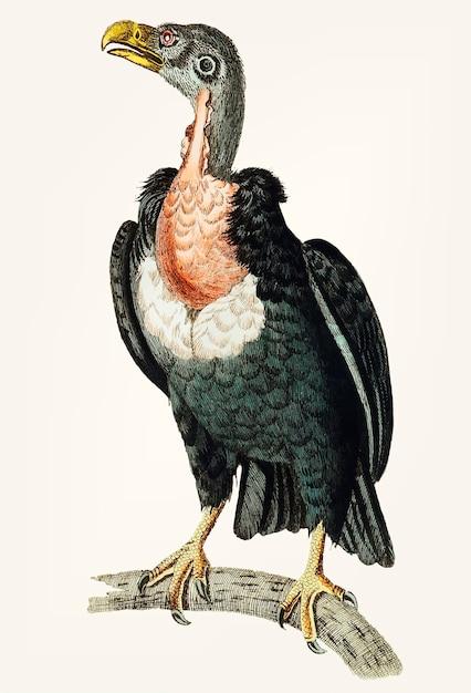 Avvoltoio nero disegnato a mano Vettore gratuito