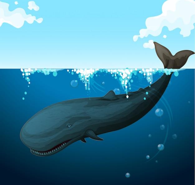 Balena nuotare sotto il mare Vettore gratuito