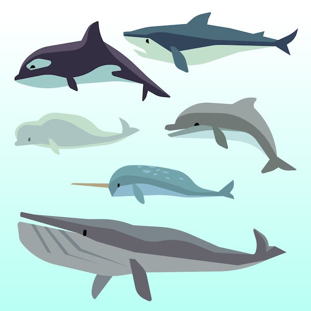 Balene e delfini, mammiferi marini sottomarini, animali marini piatti Vettore Premium