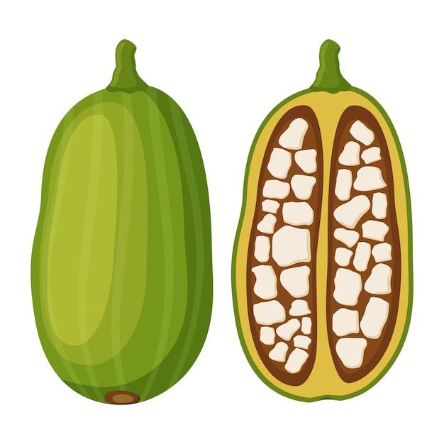 Baobab Vettore Premium