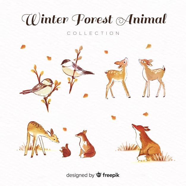 Bella collezione di animali invernali dell'acquerello Vettore gratuito