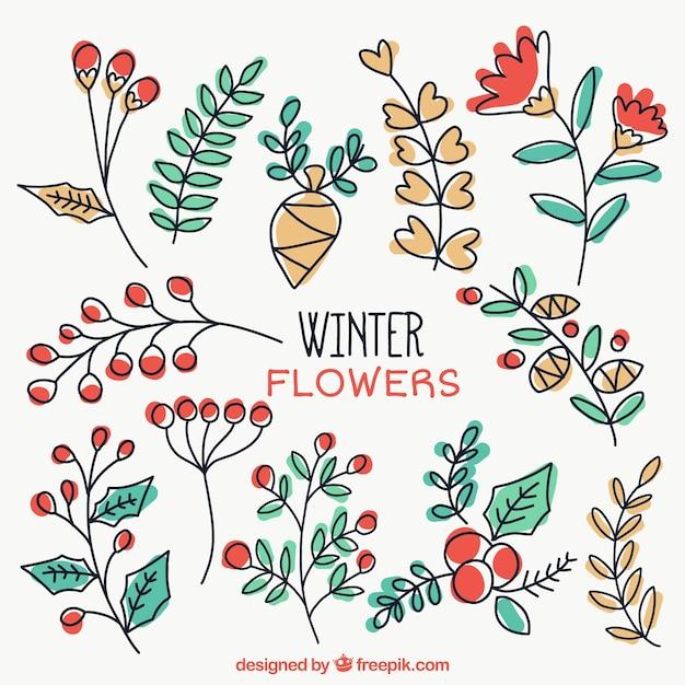 Belle piante invernali disegnati a mano scaricare for Piante invernali