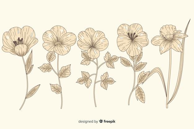 Bellissima collezione di fiori botanica vintage Vettore gratuito