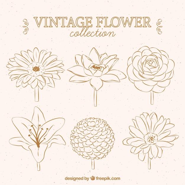 Bellissimi disegni di fiori Vettore gratuito