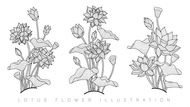 Bellissimo fiore di loto Vettore Premium