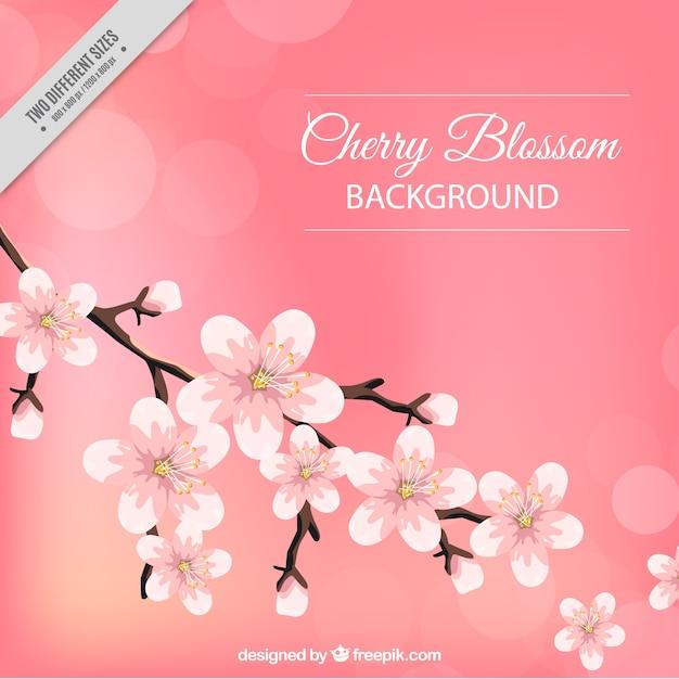 Bellissimo sfondo di fiori di ciliegio e effetto bokeh Vettore gratuito