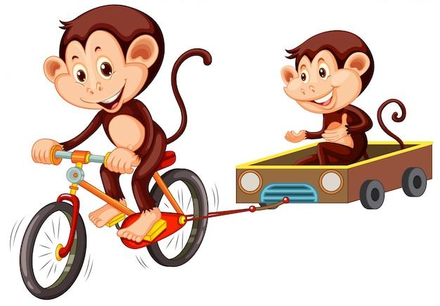 Bicicletta di guida della scimmia su fondo bianco Vettore gratuito