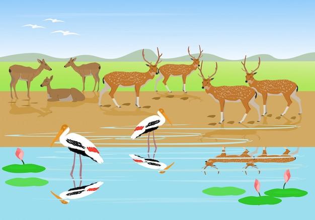 Branchi di cervi stanno riposando lungo il torrente, cicogna dipinta stanno camminando nell'acqua Vettore Premium
