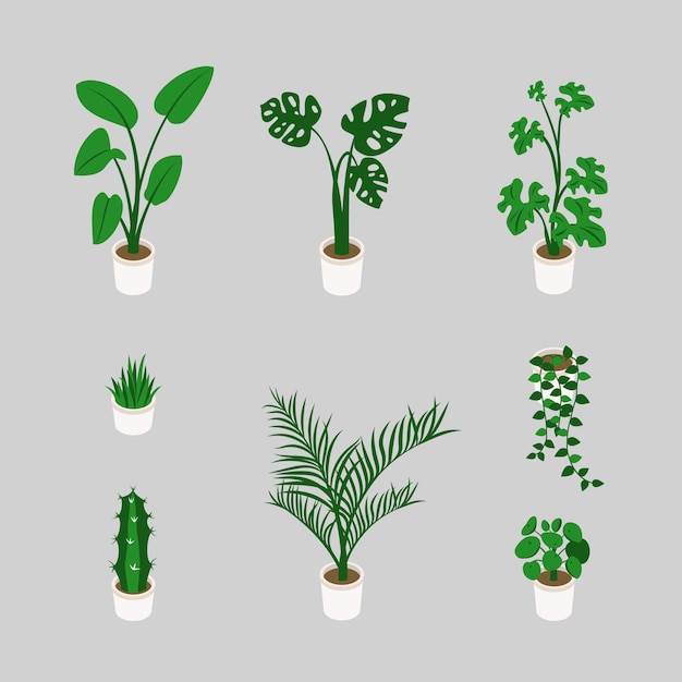 Bundle di piante alla moda che crescono in vasi in isometrica Vettore Premium