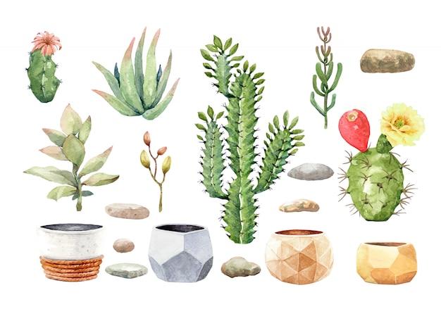Cactus cactus succulente e pietra con vaso di albero. Vettore Premium