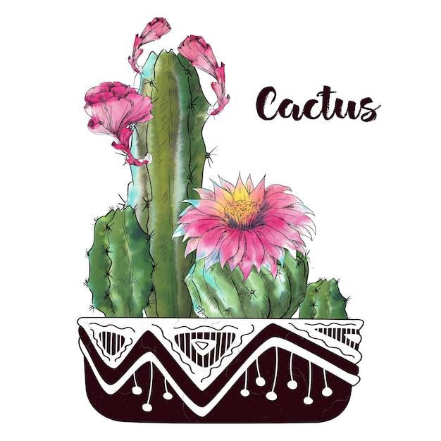 Cactus dell'acquerello isolato su sfondo bianco Vettore Premium