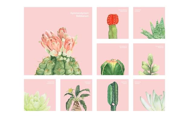 Cactus e succulente disegnati a mano Vettore gratuito