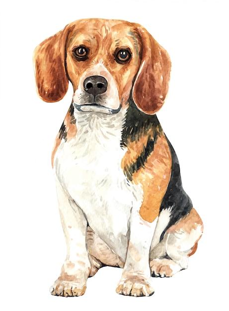 Cane dell'acquerello beagle disegnato a mano. Vettore Premium
