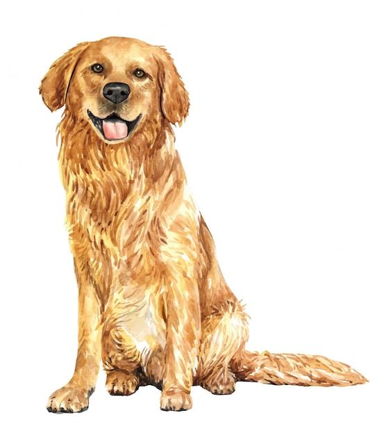 Cane dell'acquerello disegnato a mano golden retriever. Vettore Premium