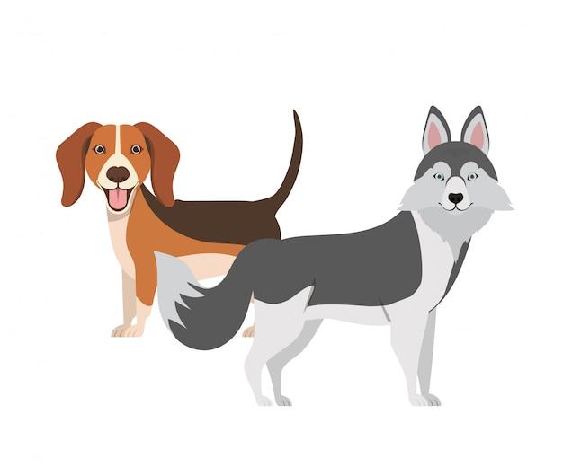 Cani svegli e adorabili su bianco Vettore Premium