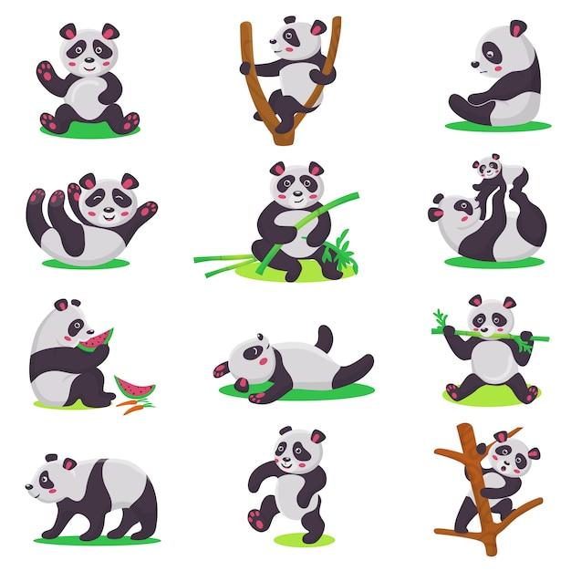 Carattere bearcat di vettore del bambino del panda o bambino dell'orso cinese che gioca o che mangia l'insieme di bambù dell'illustrazione Vettore Premium