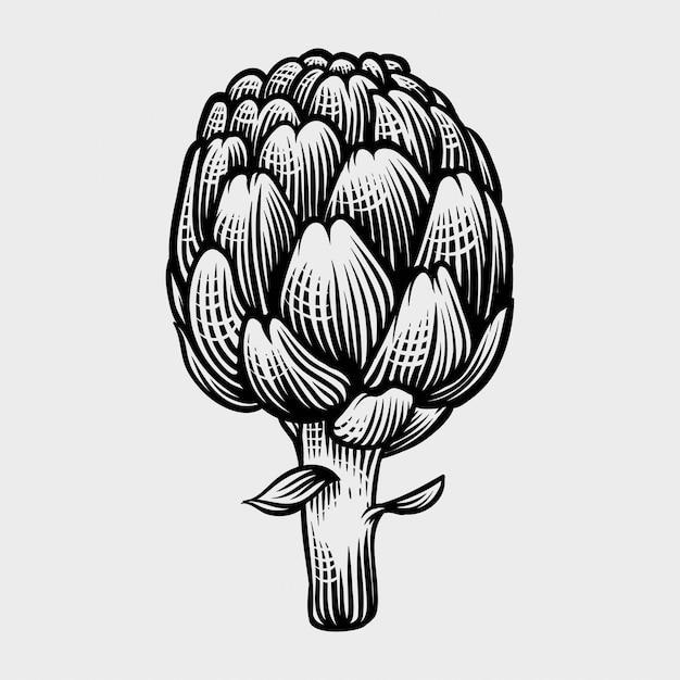 Carciofi disegnati a mano illustrazioni in stile incisione Vettore Premium