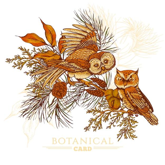 Cartolina d'auguri della foresta con gufi, abete rosso e coni d'abete Vettore Premium