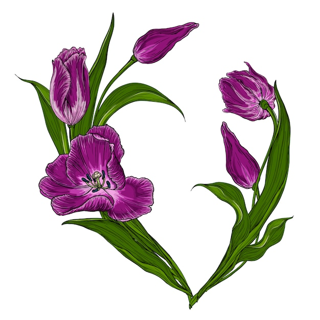 Cartolina vettoriale con tulipani rosa scuri Vettore Premium