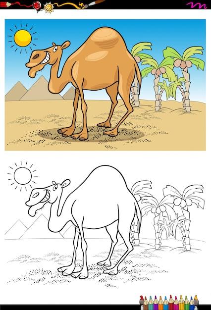 Cartone Animato Cammello Sul Libro Da Colorare Nel Deserto