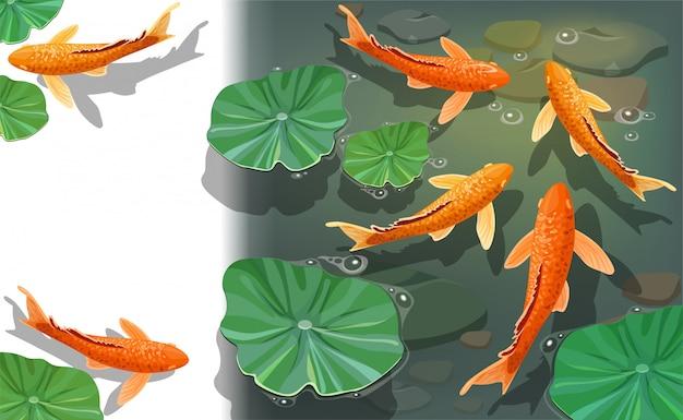 Cartone animato carpe koi. vista subacquea Vettore gratuito