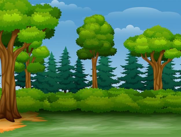 Cartone animato di alberi vista in una foresta Vettore Premium