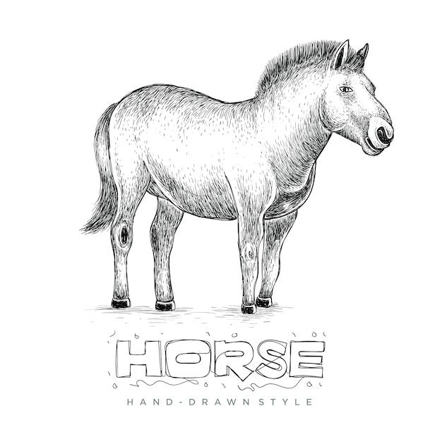 Cavallo in piedi, disegnati a mano illustrazione degli animali Vettore Premium