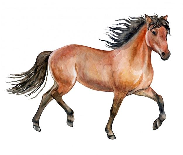 Cavallo rosso in acquerello Vettore Premium