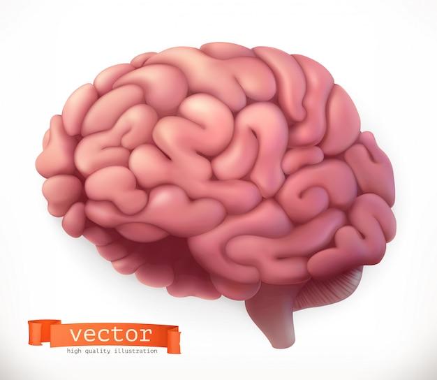 Cervello. icona 3d Vettore Premium