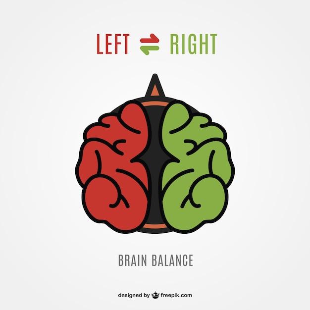 Cervello sinistro destra vettore cervello Vettore gratuito