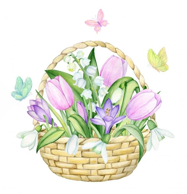 Cesto di vimini, tulipani, croco, mughetti, bucaneve, farfalle. acquerello, primavera, concerto su uno sfondo isolato. Vettore Premium