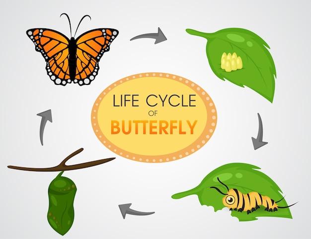 Ciclo di vita di butterfly. vettore sveglio illustion eps10 del fumetto. Vettore Premium