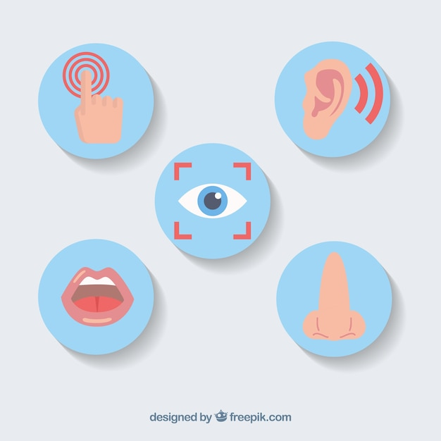 Cinque sensi set di icone Vettore gratuito