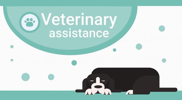 Clinica di assistenza veterinaria per animali animali banner di veterinario Vettore Premium