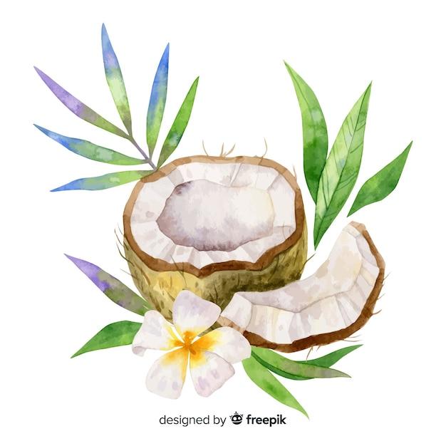 Cocco tropicale dell'acquerello con foglie Vettore gratuito