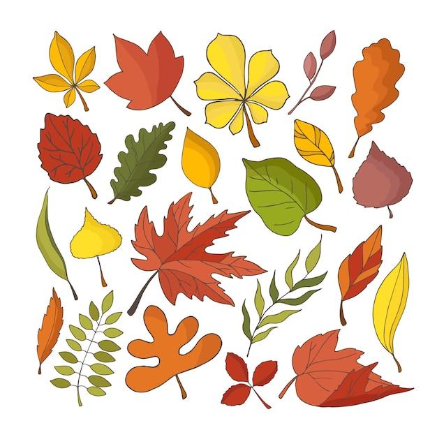 Collezione autunnale di foglie Vettore Premium