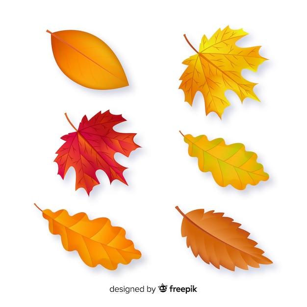 Collezione autunno foglie design piatto Vettore gratuito