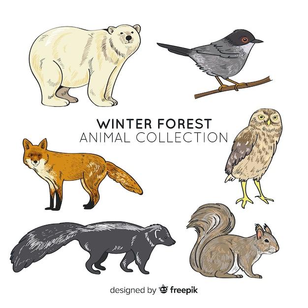 Collezione di animali della foresta invernale Vettore gratuito