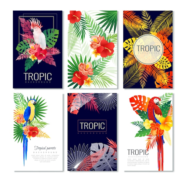 Collezione di carte di design tropicale Vettore gratuito