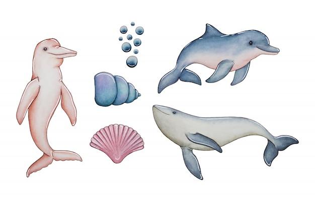 Collezione di delfini e conchiglie Vettore Premium