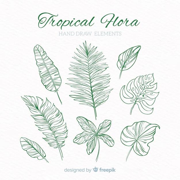 Collezione di elementi di decorazione tropicale Vettore gratuito
